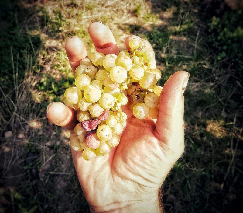 Kirrenbourg Winelovers tasting 2